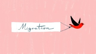 Bird migration, a perilous journey –TED Ed