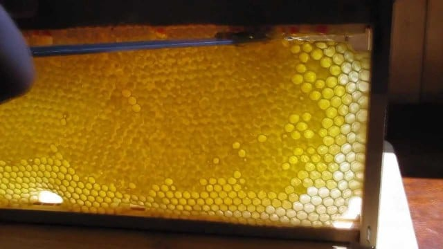 Cutting honey combs and bottling honey by hand