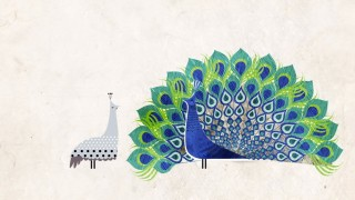 How did feathers evolve? –TED Ed