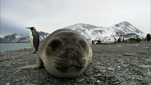 Earth Touch: Antarctica Ep2 –The animals of South Georgia Island