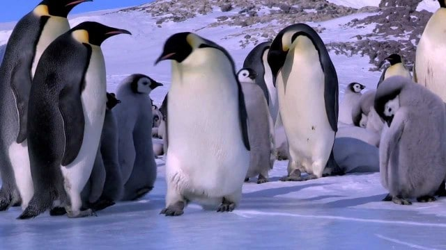 The Best Bloopers from Penguins – Spy in the Huddle