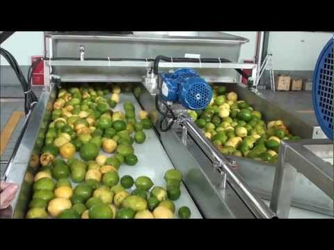 Jiggling fruit on conveyor belts