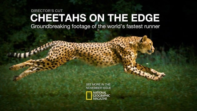 Cheetahs on the Edge—Director's Cut