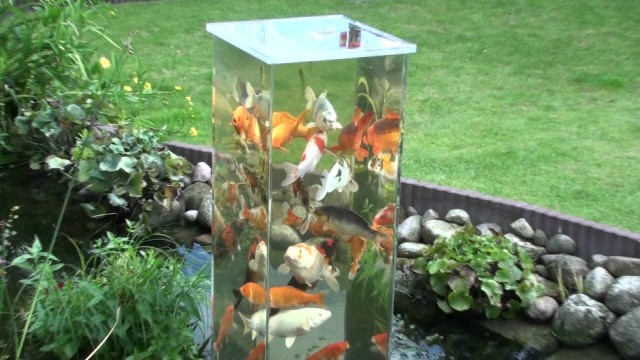 Koi Pond Skyscraper: Fish flock get a better view