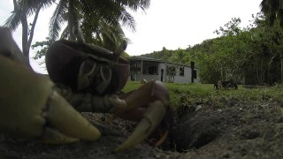 A crab takes a video camera into its hole