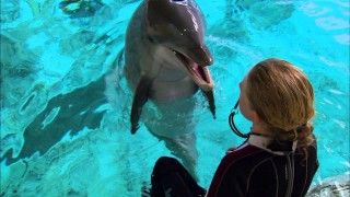 Communicating with dolphins using echolocation