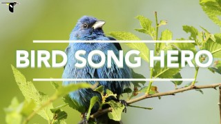 The Cornell Lab of Ornithology's Bird Song Hero