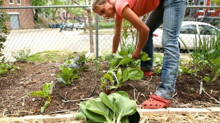 Urban Gardeners in Washinton DC Grow Crops in Spare Spaces