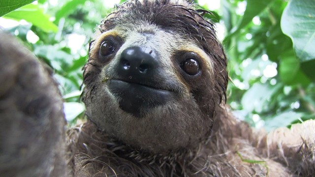 Inside a Baby Sloth Orphanage and Rescue Center