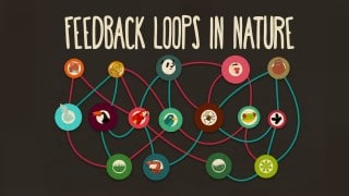 Feedback loops – How nature gets its rhythms