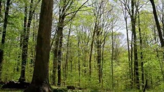 A Forest Year: Time lapse videos of Earth's cycle of the seasons