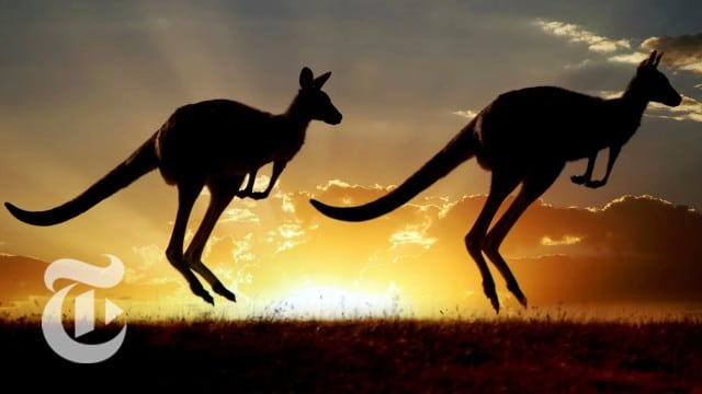 For Kangaroos, Tail Becomes a Fifth Leg – ScienceTake