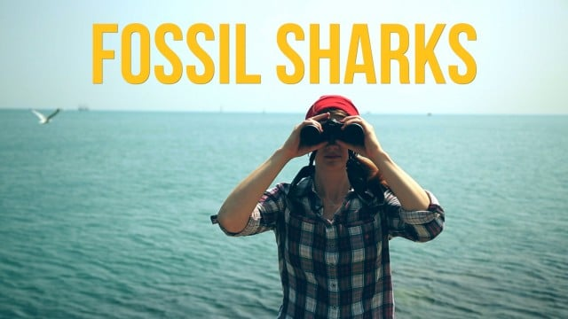 Fossil Sharks – The Brain Scoop
