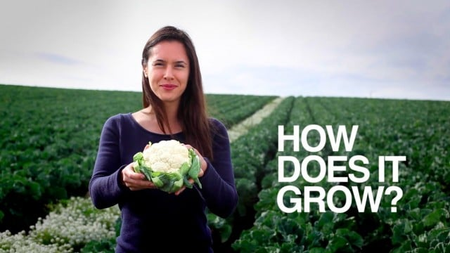 Cauliflower: How Does it Grow?