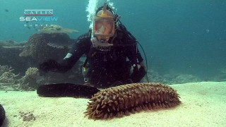 Sea cucumbers are underwater vacuum cleaners