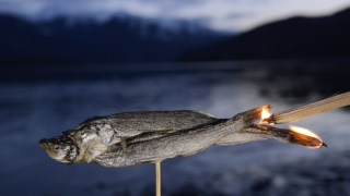 "Watch the ""Salvation Fish"" Transform From Animal to Candle"