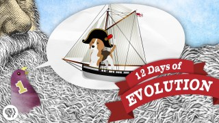 The 12 Days of Evolution – It's Okay to Be Smart