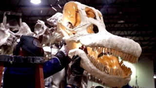 Meet the Titanosaur at AMNH