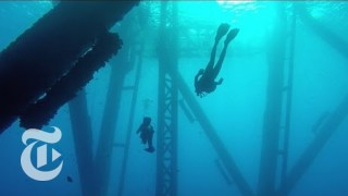 Turning Oil Rigs Into Reefs