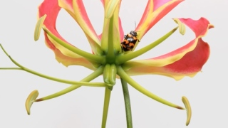 Umwelt – Time lapse flowers mix with real time insects
