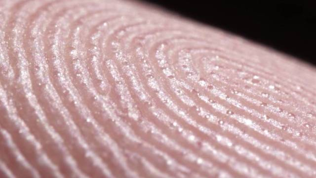 An up close look at fingerprints and sweat glands
