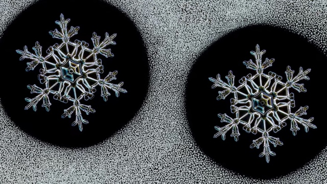 The scientist that grows 'identical twin snowflakes'
