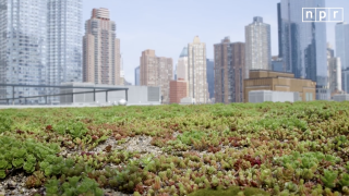 Do Cities Need More Green Roofs?