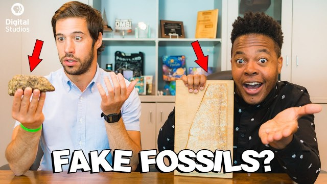 The Pseudo Fossil Challenge