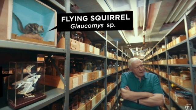 Why are museum collections so important? Sir David Attenborough explains