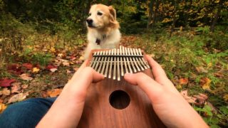 Instrumental songs played on the kalimba (and a dog named Maple)