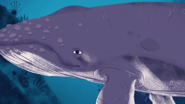 Why (and how) do whales sing?