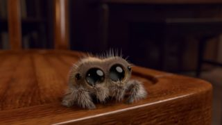 The animated adventures of Lucas the Spider