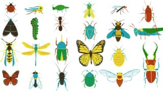 A simple way to tell insects apart: Look at their mouthparts