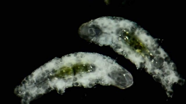 An up-close look at tardigrades and their poop