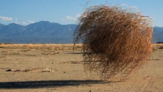 Why Do Tumbleweeds Tumble?