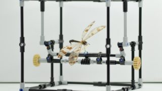 A pinned insect manipulator (IMp), the Natural History Museum's LEGO invention