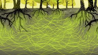 The Wood Wide Web: How trees secretly talk to and share with each other