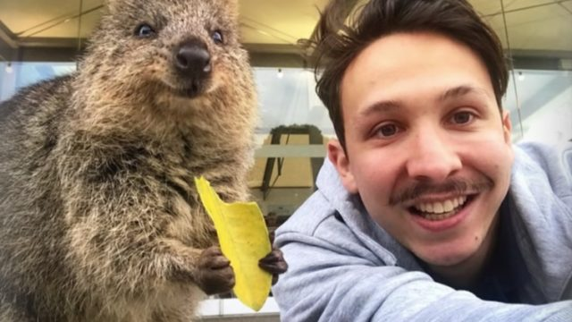 'Quokka selfie' rules that help keep quokkas safe and healthy