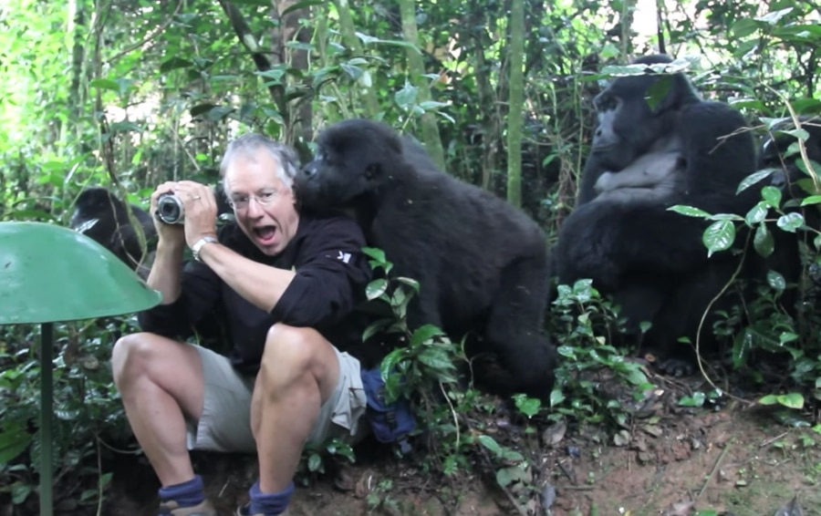 holding still with the gorillas
