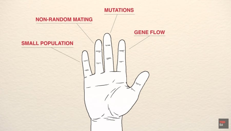 five fingers of evolution