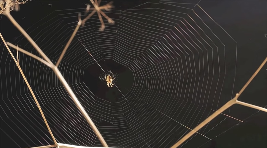 spider web time lapse