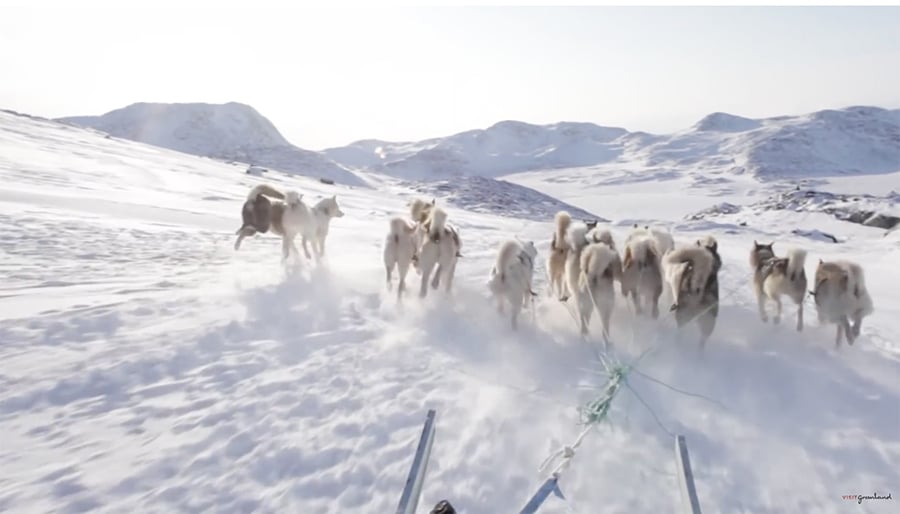 riding on a dog sled