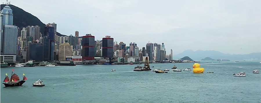 duck in hong kong harbor - distant view