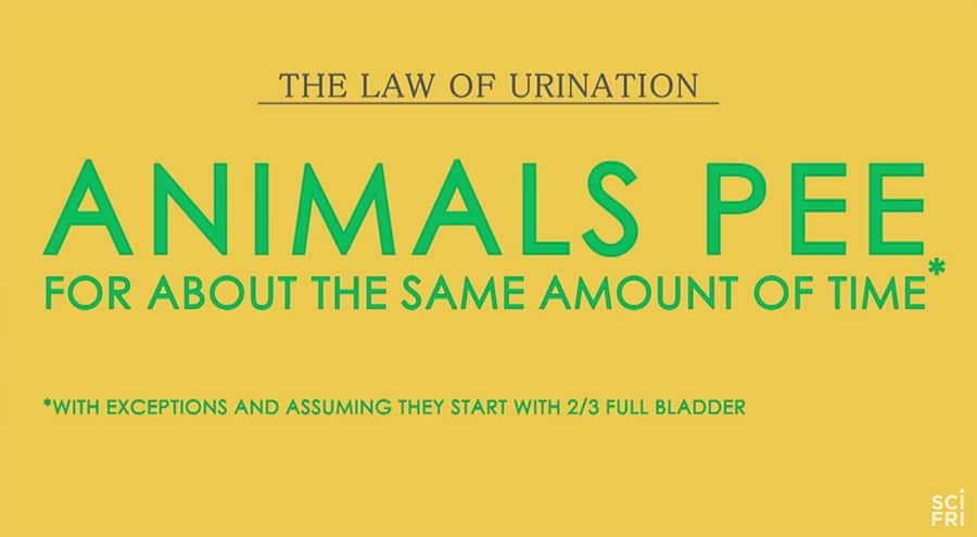 The Law of Urination