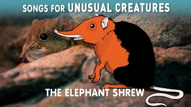 The Elephant Shrew –Songs for Unusual Creatures