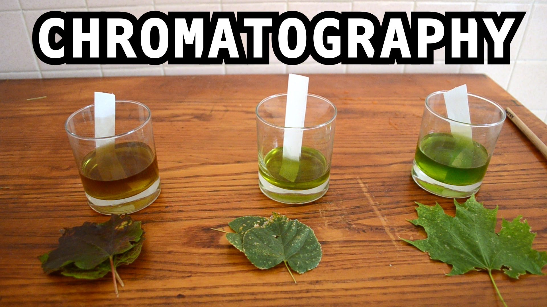 The Leaf Color Chromatography Experiment The Kid Should