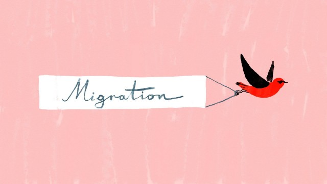 Bird migration, a perilous journey – TED Ed