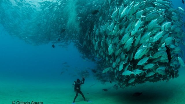 Fish Tornado –A behind-the-scenes look at the famous photograph