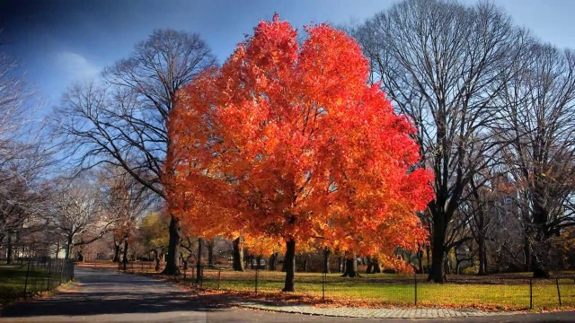 Fall, a six month autumn time lapse in Central Park