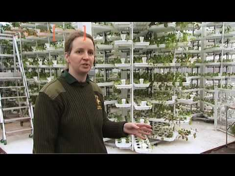 Growing food for the animals in Paignton Zoo's Vertical Farm